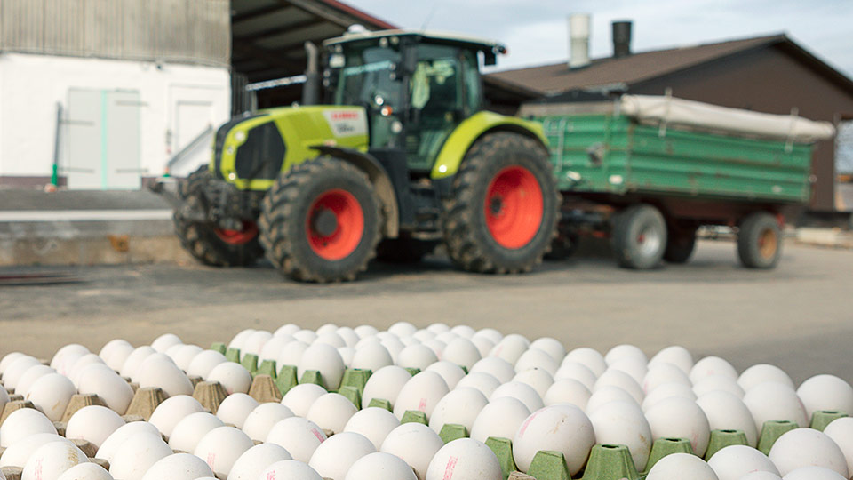 Foto eines Landwirtschaftsbetriebs mit Eiern im Vordergrund